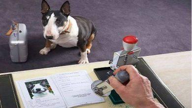 صورة «الحيوانات الأليفة» تفقد جوازات سفرها ثمنًا لخروج بريطانيا من الاتحاد الأوروبي