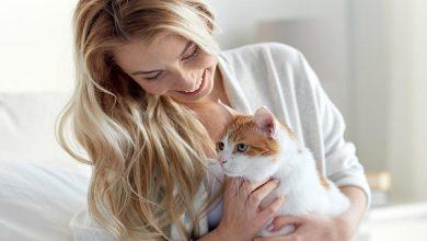 صورة د. أحلام محمود تكتب: مُخالطة القطط أثناء فترة الحمل.. المخاطر والوقاية وطرق العلاج